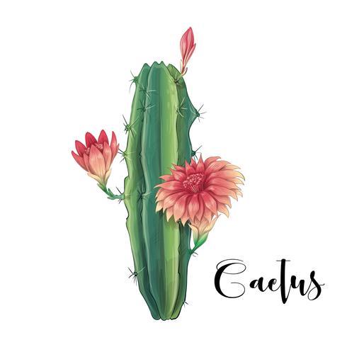 Cactus in woestijnvector en illustratie, hand getrokken die stijl, op witte achtergrond wordt geïsoleerd. vector
