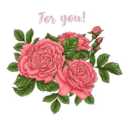Set van koraal rozen Hand tekenen vector
