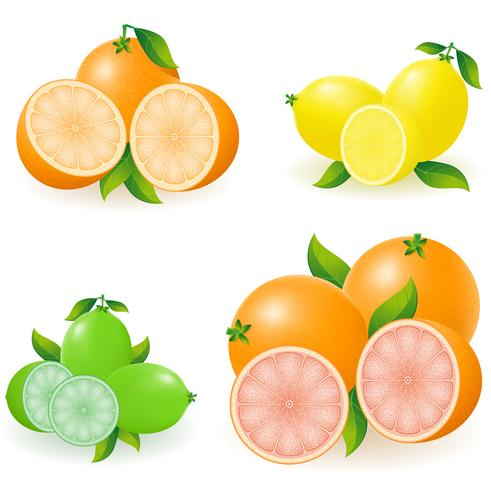 set van citrus oranje citroen kalk grapefruit vectorillustratie vector