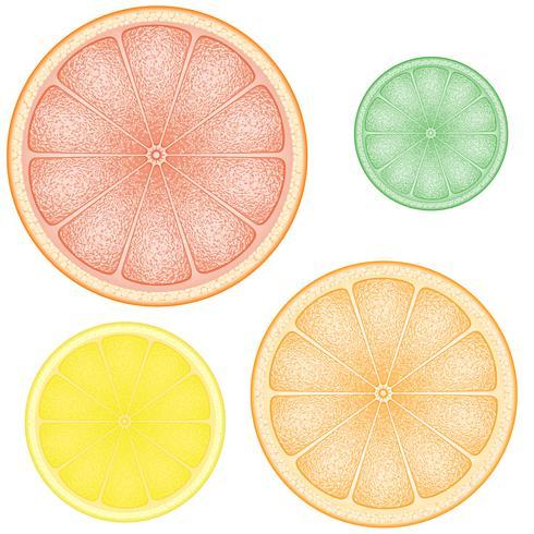 set van citrus in de schijf oranje limoen grapefruit vector