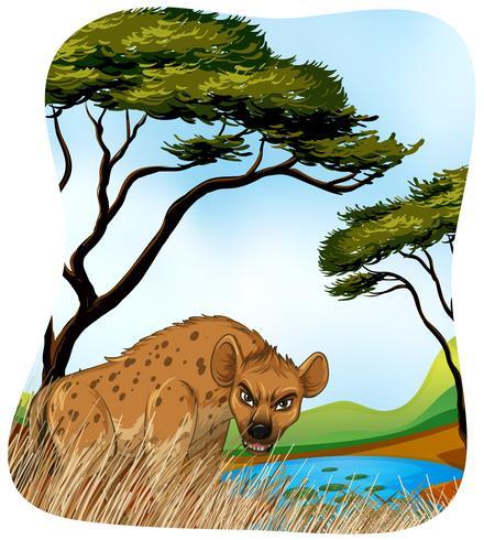 Bruine hyena in de natuur vector