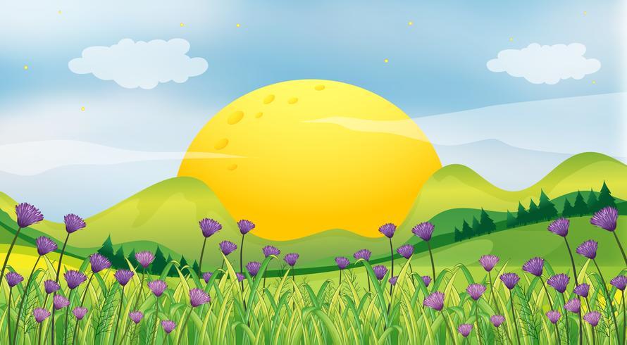 Een rijzende zon vector