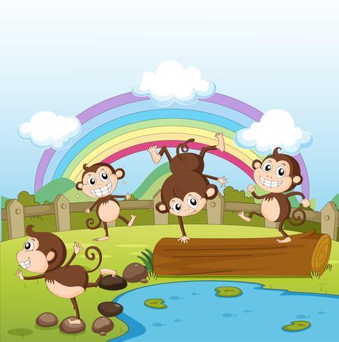 Apen en een regenboog vector