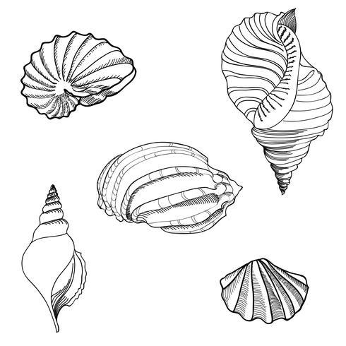 Zeeschelp, zeesterren ingesteld. Zomervakantie mariene achtergrond. vector