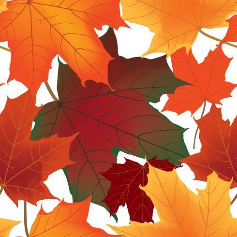 Herfst esdoorn bladeren naadloze patroon Floral achtergrond vector