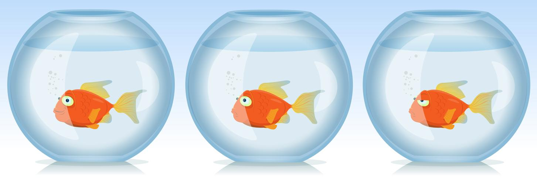 Gouden vissen leven en tijden in het aquarium vector