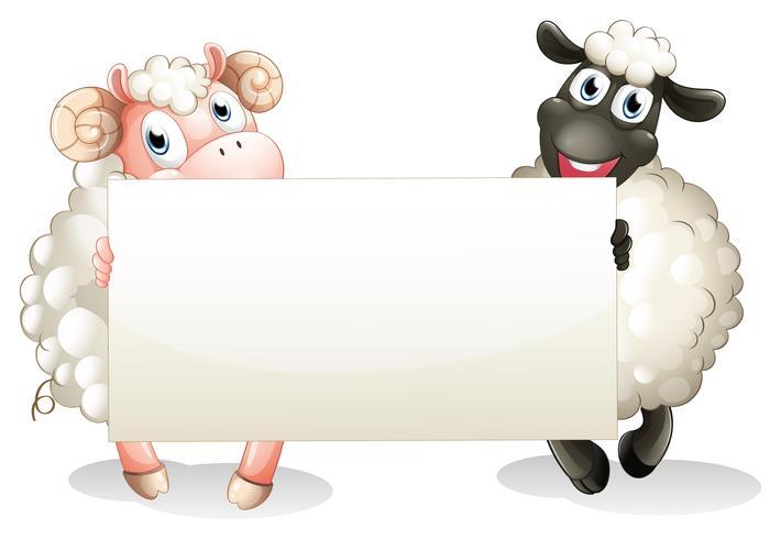 Twee sheeps die een lege banner houden vector