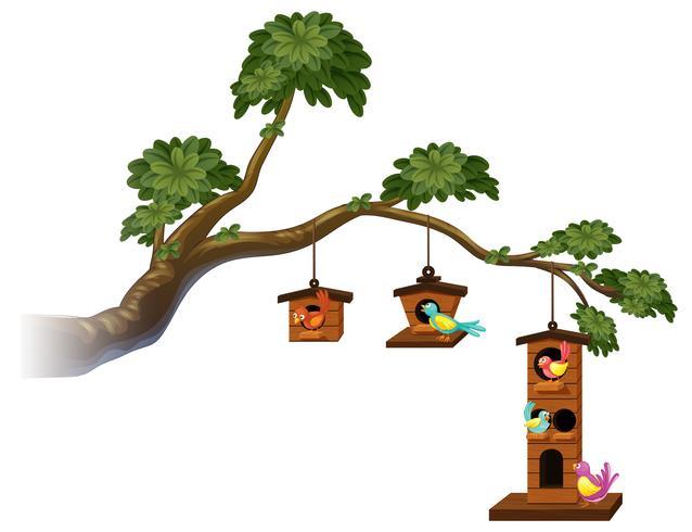 Vogelhuisjes met vogels op de tak vector