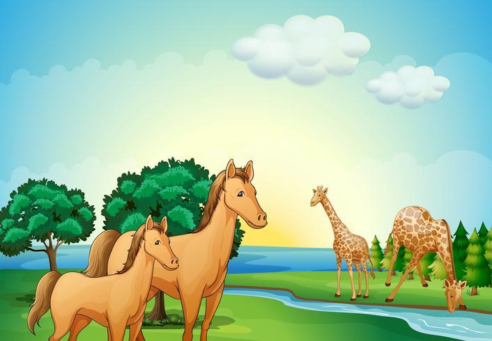 Paarden en giraffe in de buurt van de rivier vector