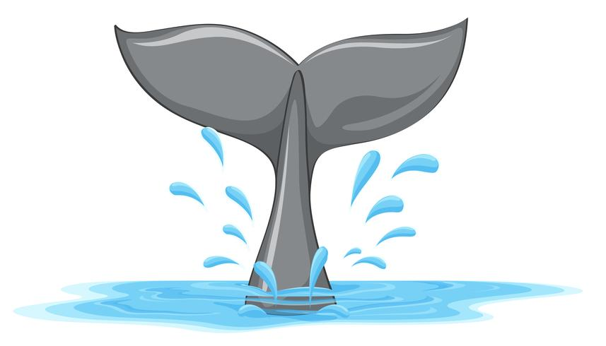 Een staart van een walvis vector
