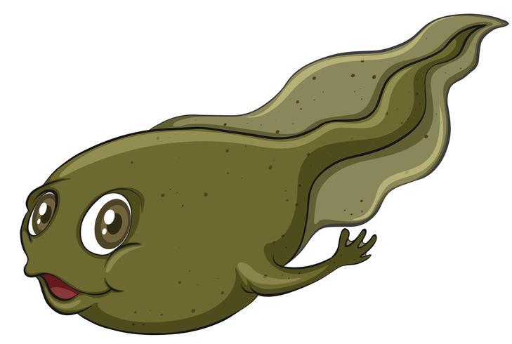 Een kikkervisje vector