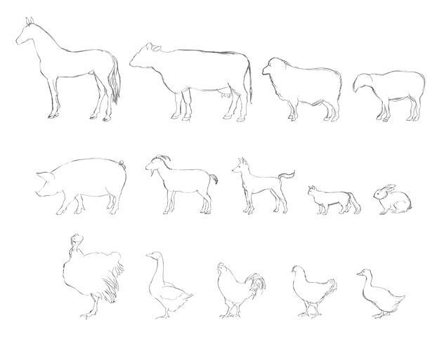 Landbouwhuisdieren getrokken schets pictogramserie. Vee. vector