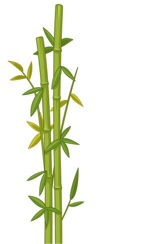 Bamboe boom vectorillustratie vector