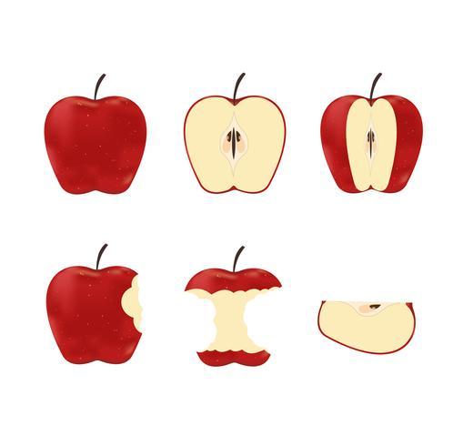 Vectorillustratie van vastgestelde rode rijpe die appelen op witte achtergrond worden geïsoleerd vector