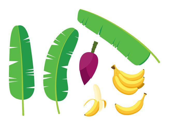 verzameling van verse bananen palmboom vector set