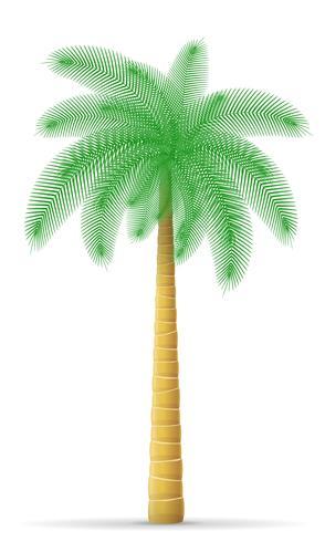 palmboom vectorillustratie vector