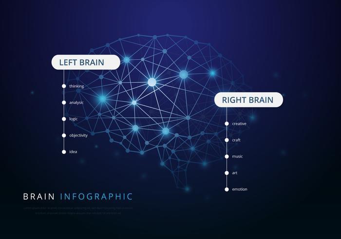 Human Brain Hemispheres Illustration vector