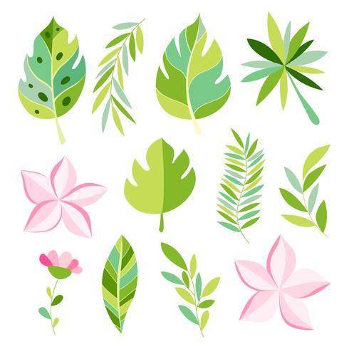 Tropische collectie met exotische bloemen en bladeren. vector