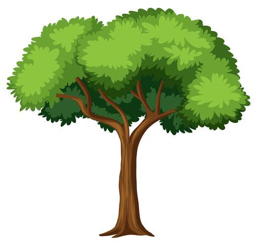 Geïsoleerde boom op witte achtergrond vector