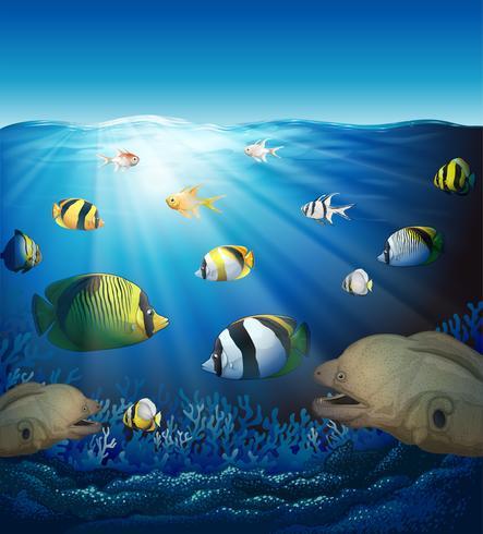 Onderwaterscène met vissen en zeewieren vector