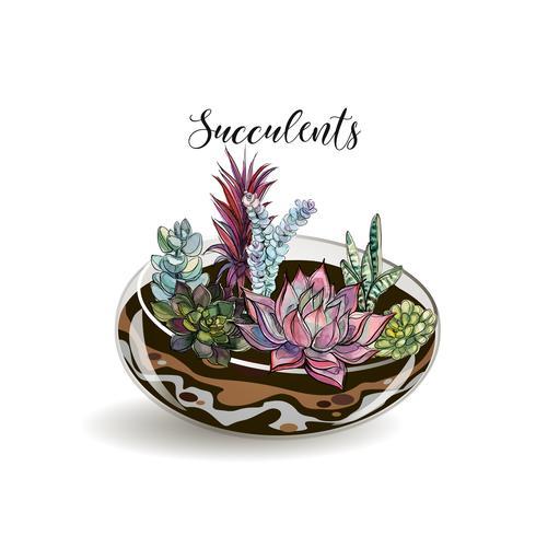 Vetplanten in glazen aquaria. Decoratieve bloemsamenstellingen. Graphics. Waterverf. Vector. vector