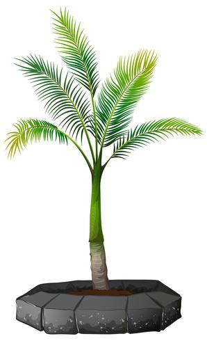 Een palmboom op witte achtergrond vector