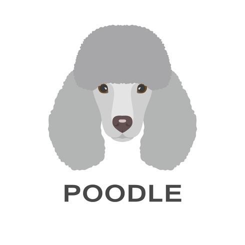 Vectorillustratie van poedel in vlakke stijl. Poedel platte pictogram. vector