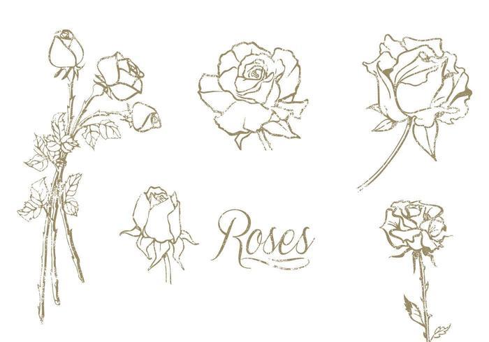 Hand getekende rozen vector set