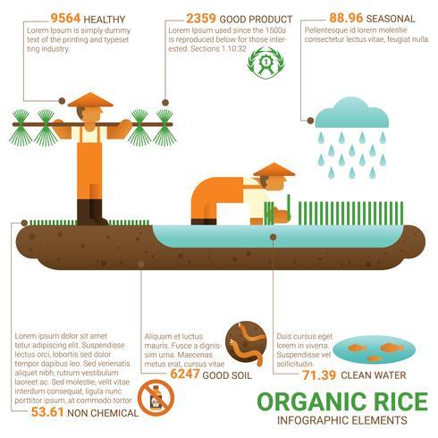 Gezonde voedsel biologische rijst vector