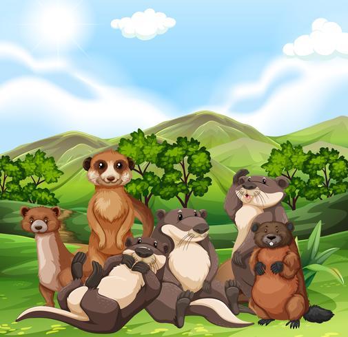 Otters en bevers in het veld vector