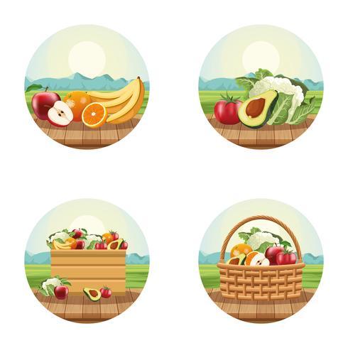 Fruit en groenten vector