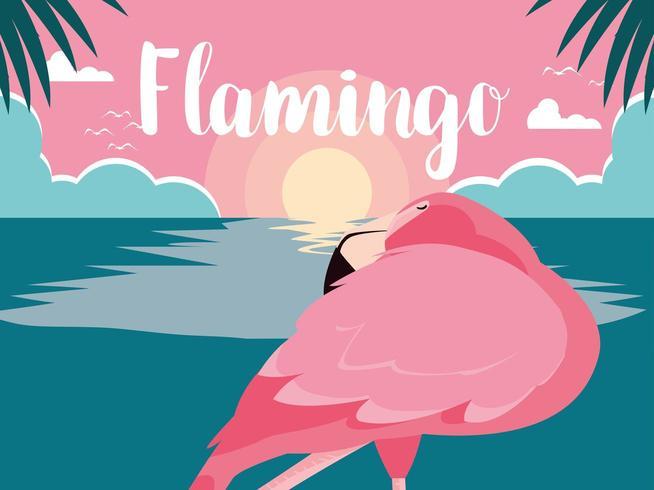 slapende flamingo staande in water vector