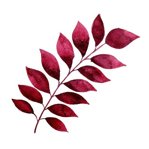 Mooie aquarel herfstblad vector