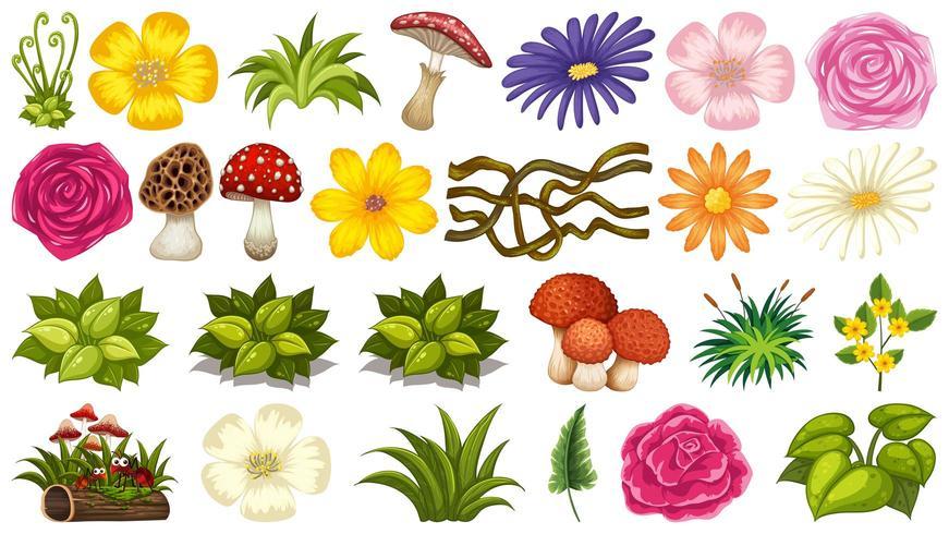 Set van sierplanten vector
