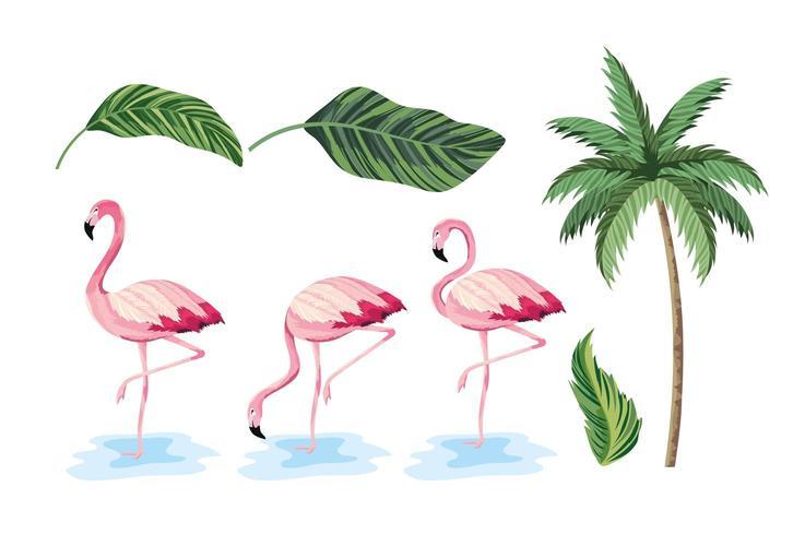 exotische bladeren en tropische palmboom instellen vector