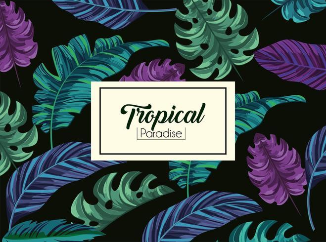 tropische bladeren planten en exotisch label vector