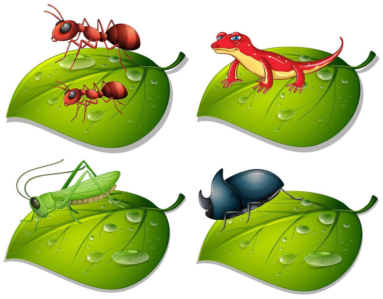 vier soorten insecten op groene bladeren vector