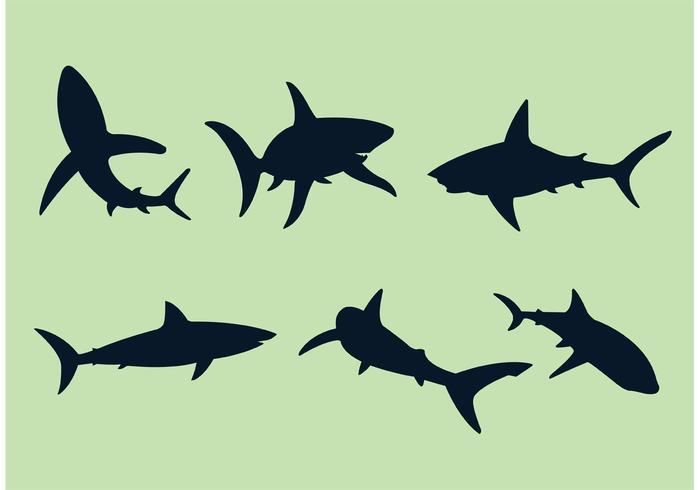 Grote Witte Haai Vectoren
