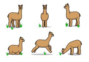 Gratis Alpaca Vector