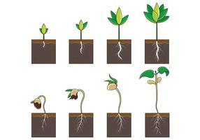 Groei plantaardige vector