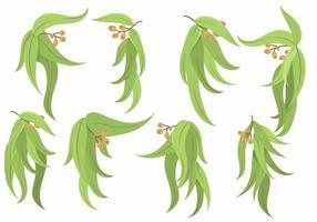 Eucalyptus icon set vector