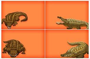 krokodil achtergrond sjabloon set vector