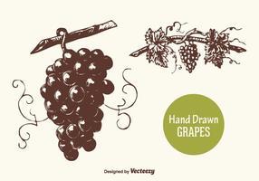 Gratis Handgetekende Druiven Vector