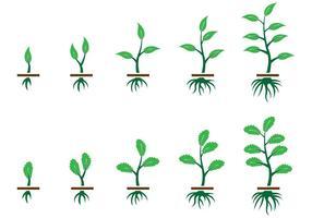Groeien plantaardige vector op