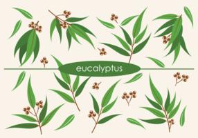 Vector eucalyptus