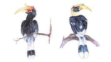 neushoornvogel geschilderd in aquarel