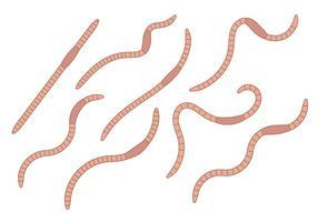 Aardworm Vector Set