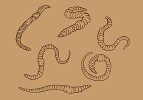 Aardworm overzicht vector
