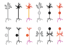 Set Van Neuron Vector