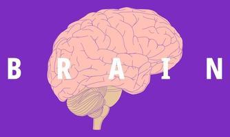 menselijk breinontwerp vector